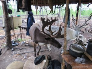 Sibirien Ewenken Rentiere by Birgit Strauch Shiatsu Bewusstseinscouching Massage