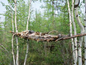 Rentiere Sibirien Ewenken by Birgit Strauch Shiatsu ThetaHealing Massagen