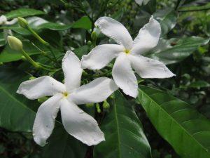 Blume Borneo Mulu Nationalpark by Birgit Strauch Shiatsu Massagen und Bewusstseinscoaching
