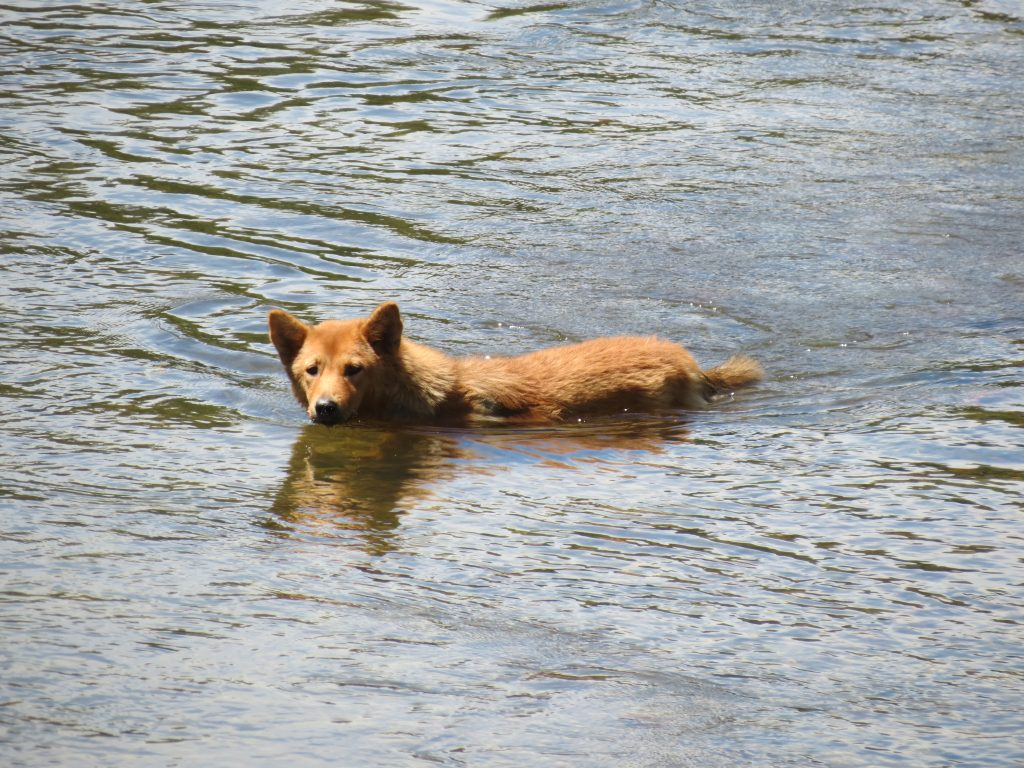 Hunde Borneo Mulu Nationalpark by Birgit Strauch Shiatsu Massagen ThetaHealing