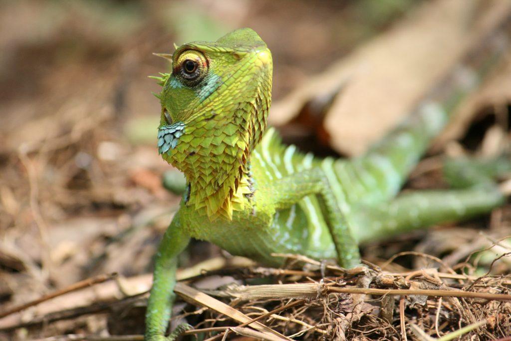 Sinharaja Rainforest Sri Lanka by Birgit Strauch Shiatsu & ThetaHealing
