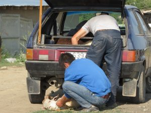 Karakol größte Viehmarkt Zentralasiens by Birgit Strauch Shiatsu & ThetaHealing