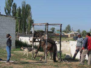 Pferde Kühe Karakol größte Viehmarkt Zentralasiens by Birgit Strauch Shiatsu & ThetaHealing