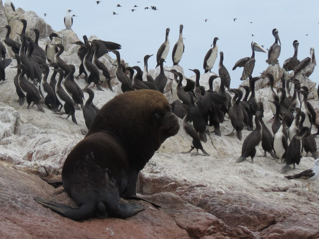 Islas Ballestas Peru Reisebericht by Birgit Strauch Shiatsu Bewusstseinscoaching