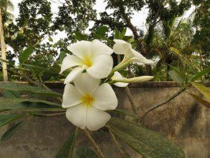 Affen Varane Tangalle Ganesh Garden by Birgit Strauch Shiatsu & ThetaHealing