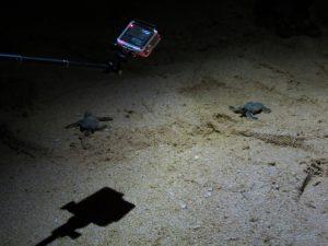 Turtles Tangalle Ganesh Garden by Birgit Strauch Shiatsu & ThetaHealing