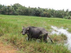 Mirissa Sri Lanka by Birgit Strauch Shiatsu & ThetaHealing