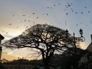 GreenWoods Kandy Affen by Birgit Strauch Shiatsu & ThetaHealing