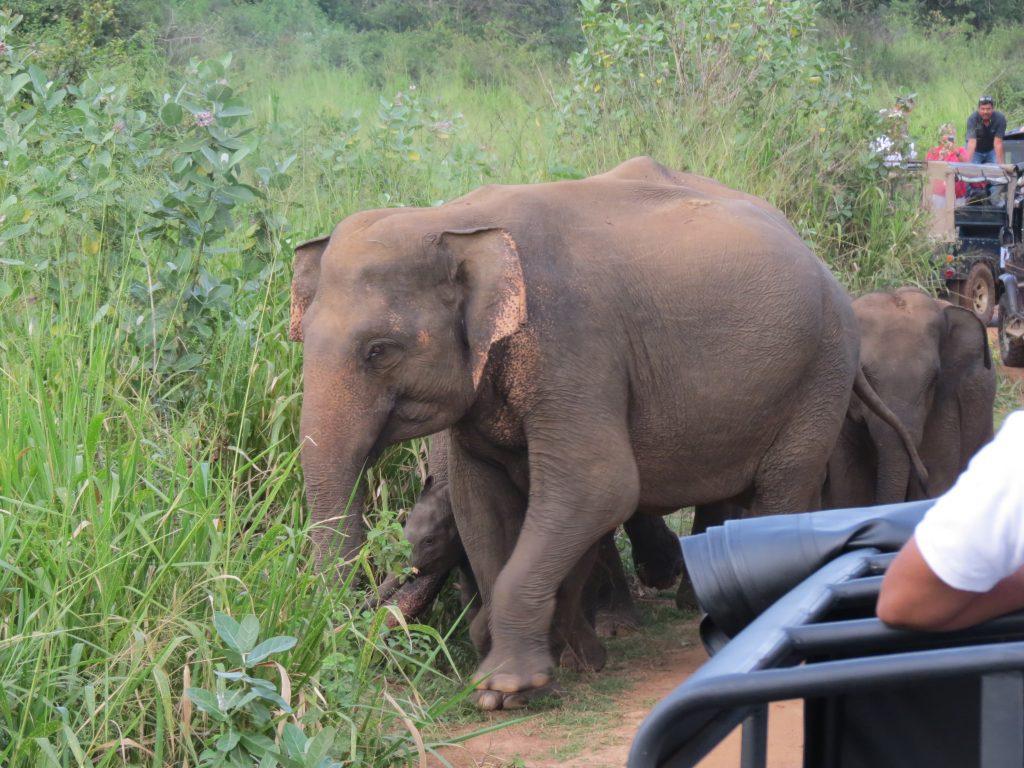 Hurulu Eco Park Elefanten Sri Lanka by Birgit Strauch Shiatsu ThetaHealing