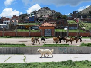 Hunde Copacabana Titicacasee Bolivien by Birgit Strauch Shiatsu ThetaHealing
