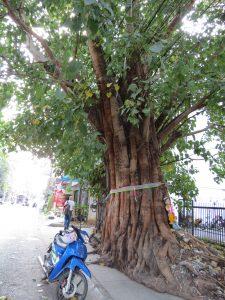 Wat Chieng Mun Chiang Mai by Birgit Strauch Thaimassage & Bewusstseinscoaching