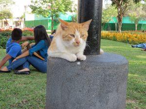 Parque Central de Miraflores Katzenpark Mira Flores Lima Peru by Birgit Strauch Shiatsu & Bewusstseinscoaching