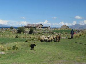 Puno Titicaca See Flamingos by Birgit Strauch Shiatsu & Bewusstseinscoaching
