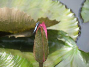 Garten Treetops Lodge Miri Sarawak by Birgit strauch Shiatsu & ThetaHealing