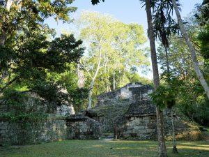 Tikal Klammeraffen Mono Arana Kaugummi Vogelspinne Guatemala by Birgit Strauch Shiatsu & Bewusstseinscoaching