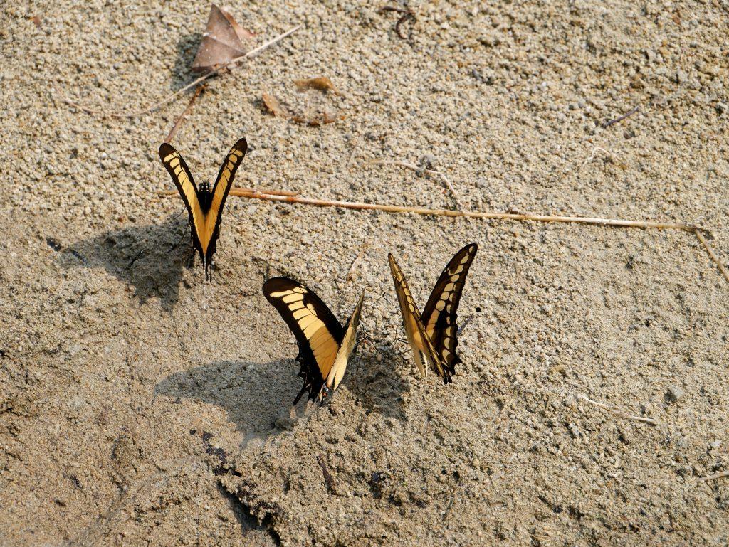 Schmetterlinge Laguna Lachua Guatemala by Birgit Strauch Shiatsu & Bewusstseinscoaching