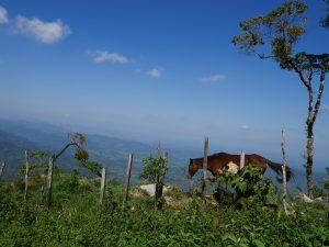 Pferd Von Playa Grande nach Barillas in Guatemala by Birgit Strauch Shiatsu & Bewusstseinscoaching