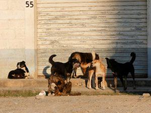 Hunde Busbahnhof Bus und Menschen in Barillas in Guatemala by Birgit Strauch Shiatsu & Bewusstseinscoaching