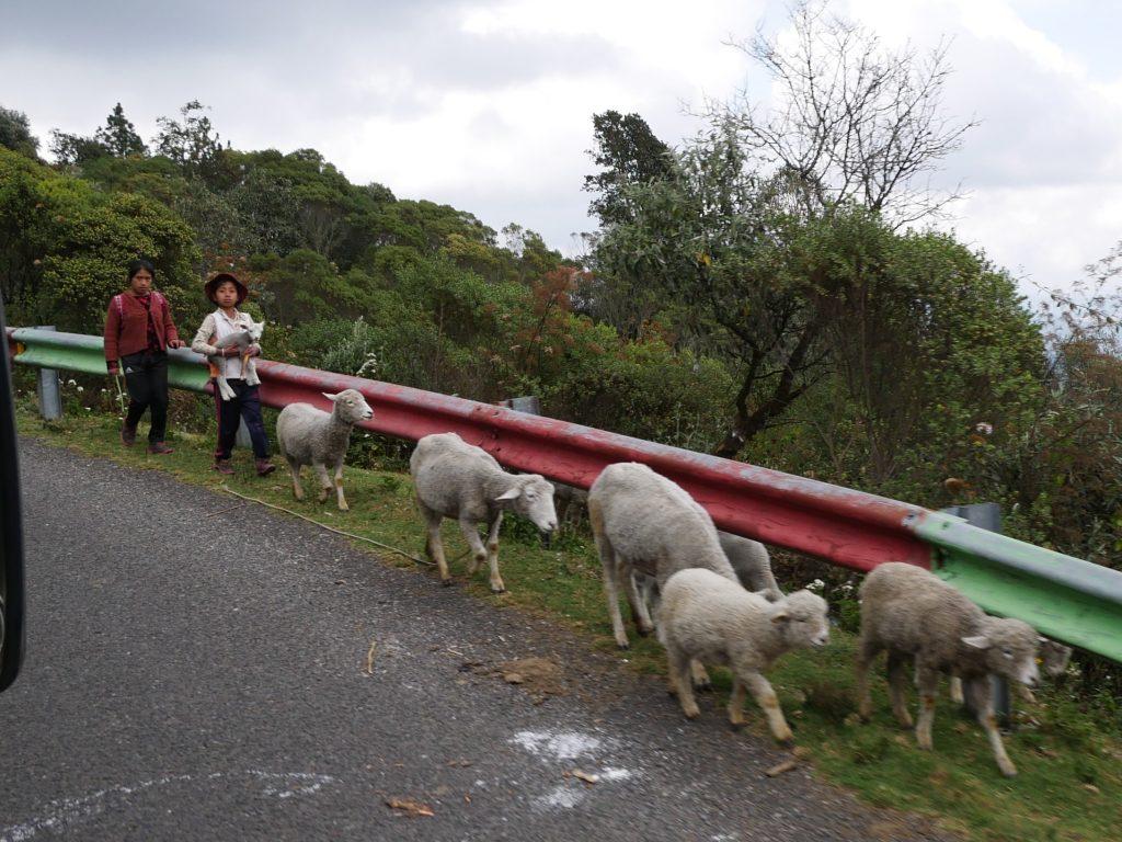 Cuchamatanes Chickenbus von San Miguel Acatan nach Tres Caminos Guatemala by Birgit Strauch Shiatsu & Bewusstseinscoaching