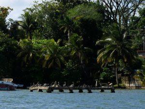 Pelikan Bootsfahrt Rio Dulce Livingston by Birgit Strauch Bewusstseinscoaching & Shiatsu
