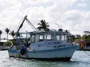 Pelikane Bootsfahrt Livingston Guatemala by Birgit Strauch Bewusstseinscoaching & Shiatsu