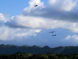 Fregattvögel Livingston Rio Dulce by Birgit Strauch Shiatsu & Bewusstseinscoaching