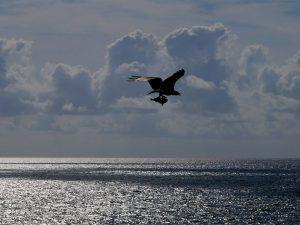 Adler fängt Fisch Tulum Ruinen Waran Mexiko by Birgit Strauch Bewusstseinsscoaching und Shiatsu