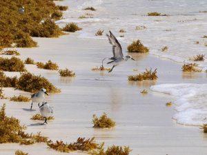 Vögel Mezzanine Tulum Strand Mexiko by Birgit Strauch Bewusstseinsscoaching und Shiatsu