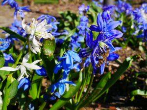 Wege zum Glück Blumen by Birgit Strauch Bewusstseinscoaching