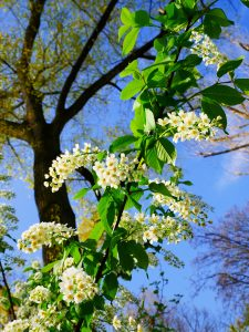 Berlin Blumen by Birgit Strauch Bewusstseinscoaching & Shiatsu