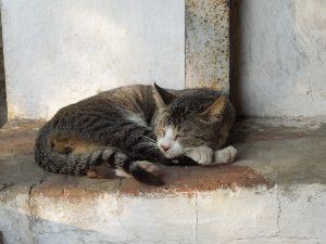 Katzen in Myanmar Burma by Birgit Strauch Bewusstseinscoaching & Shiatsu