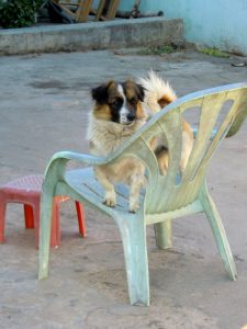 Hunde Welpen in Myanmar Burma by Birgit Strauch Bewusstseinscoaching & Shiatsu