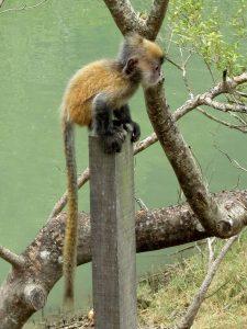 Affe im Bako Nationalpark Borneo by Birgit Strauch Shiatsu & Bewusstseinscoaching