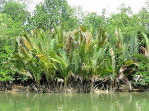 Mangroven Bootstour Santubong Nationalpark Borneo by Birgit Strauch Shiatsu & Bewusstseinscoaching