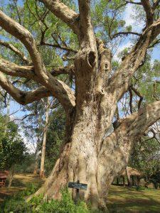 Botanischer Garten Pyin Oa Lwin Grace Hotel Myanmar by Birgit Strauch Lifecoach Bewusstseinscoaching