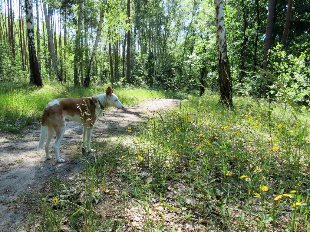 Ragower Mühle Schlaubetal Wandern mit Hund Zelten by Birgit Strauch Bewusstseinscoaching & Shiatsu
