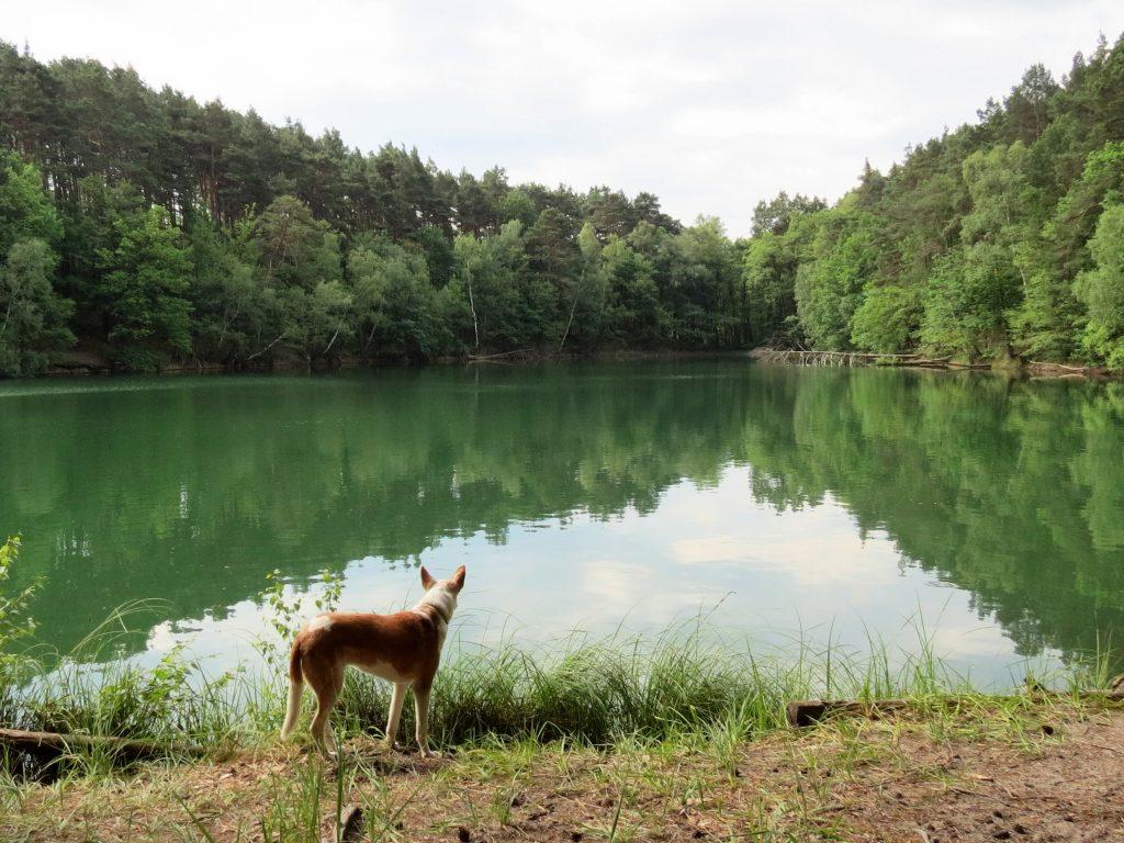 Schervenzsee Camping Schlaubetal Wandern mit Hund Zelten by Birgit Strauch Bewusstseinscoaching & Shiatsu