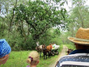 Letea Wald Pferde Donaudelta Rumänien by Birgit Strauch ThetaHealing & Life Coaching