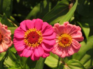 Dankbarkeit, der Schlüssel zum Glück by Birgit Strauch Bewusstseinscoaching