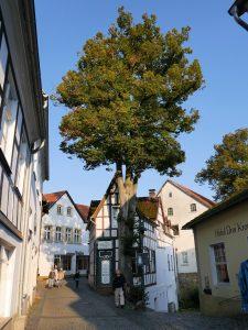 Tecklenburg Cafe Himbeerkuchen by Birgit Strauch Bewusstseinscoaching & Shiatsu