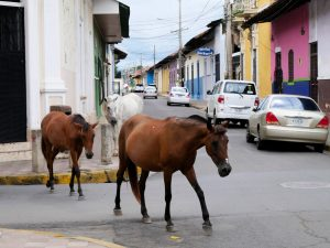 Pferde Granada Nicaragua by birgit Strauch Shiatsu & Bewusstseinscoaching