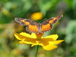 Charco Verde Ometepe Nicaragua Schmetterlinge by Birgit Strauch Bewusstseinscoaching