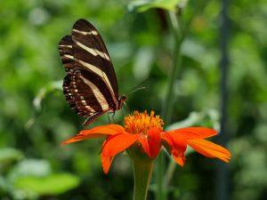 Schmetterling Spirituelles Finden by Birgit Strauch Shiatsu & Bewusstseinscoach