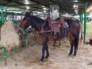 Rodeo und Cowboys in Juigalpa Nicaragua by Birgit Strauch Shiatsu & Bewusstseinscoaching