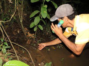 Sabalos Lodge Bull Frog auf der Kaiman Tour by Birgit Strauch Bewusstseinscoaching & Shiatsu