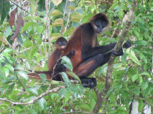 Affen Indio Maiz Nationalpark by Birgit Strauch Bewusstseinscoaching & Shiatsu