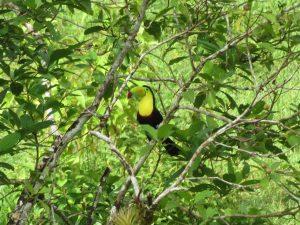 Tukan Indio Maiz Nationalpark by Birgit Strauch Bewusstseinscoaching & Shiatsu