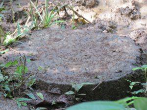 Ameisen Indio Maiz Nationalpark by Birgit Strauch Bewusstseinscoaching & Shiatsu
