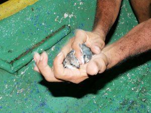 Sabalos Lodge Rainbirds auf der Kaiman Tour by Birgit Strauch Bewusstseinscoaching & Shiatsu
