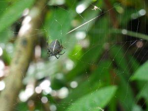 Spinne Indio Maiz Nationalpark by Birgit Strauch Bewusstseinscoaching & Shiatsu
